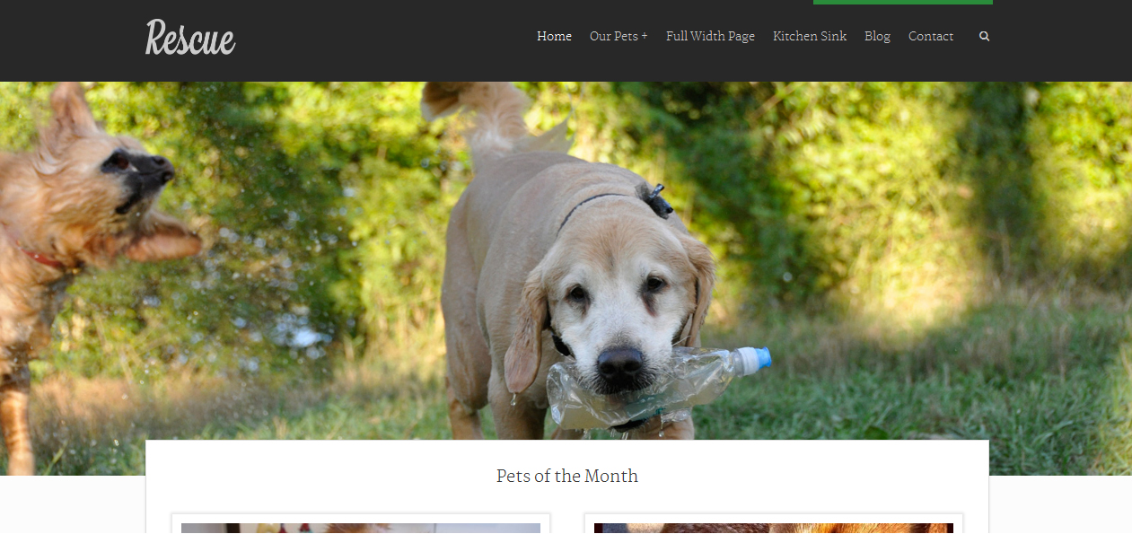 Rescue - Best Pet WordPress Themes