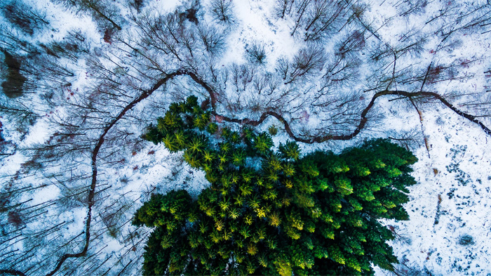 Kalbyris Forest in Denmark Placed First in Nature and Wildlife